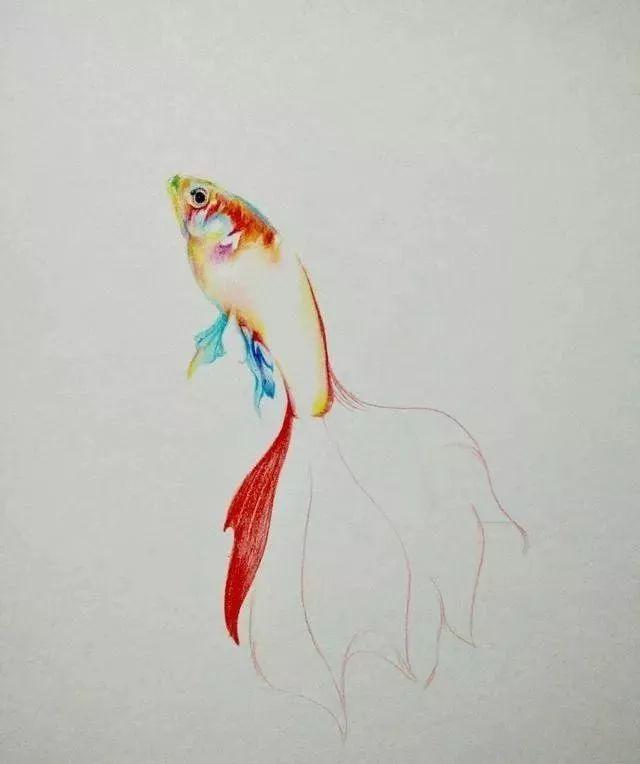 【彩铅教程】彩铅手绘金鱼教程,年年有鱼