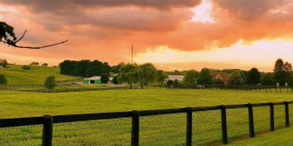 住在农场附近可以有效预防过敏