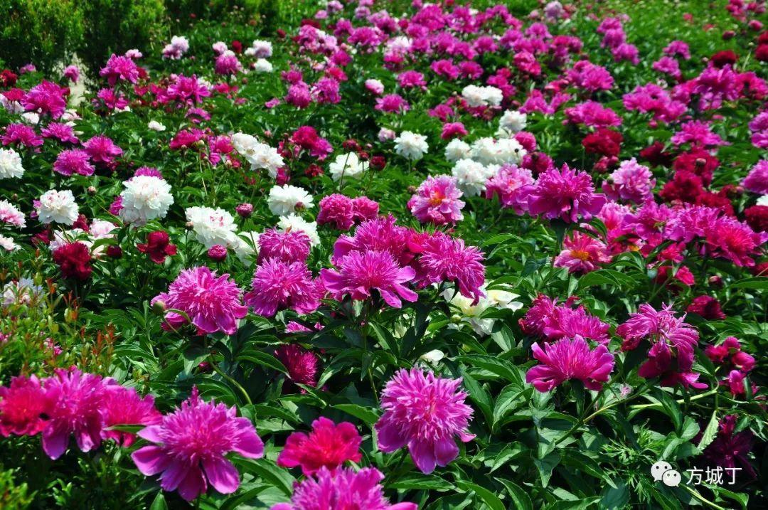 少女与孩子都是最美的花,最美的花穿梭在最美的花丛中,就是一幅最美的