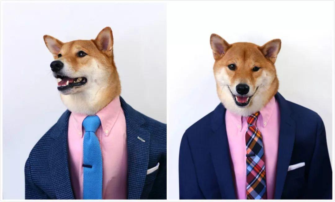 月入1万美金,帅到各种时尚大牌求合作,它是条狗...