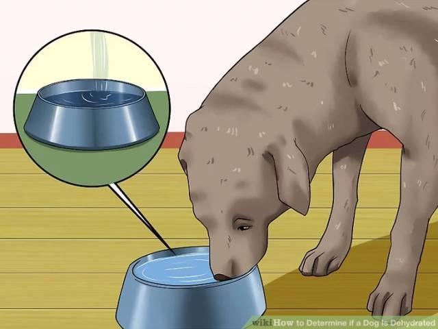 猫咪脱水怎么办图片