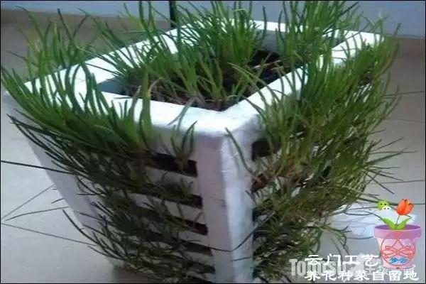 废物利用diy 泡沫箱创意手工制作阳台种菜菜盆图解