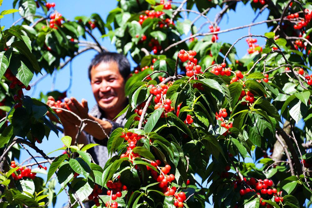五月龙街 樱桃之约――龙街镇第三届樱桃旅游节掠影