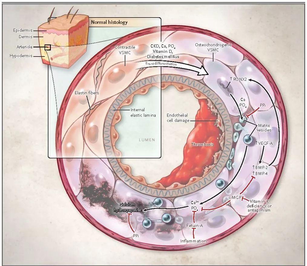是什么生理原理_男人的生理器官是什么