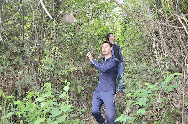 重庆石柱:干部深山密林查罂粟