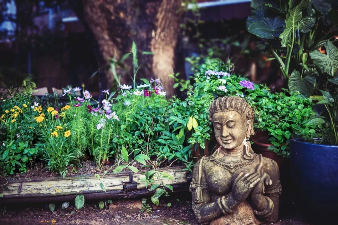 每日一禅:学会倾听,你会发现世界很美 - 清 雅 - 清     雅博客