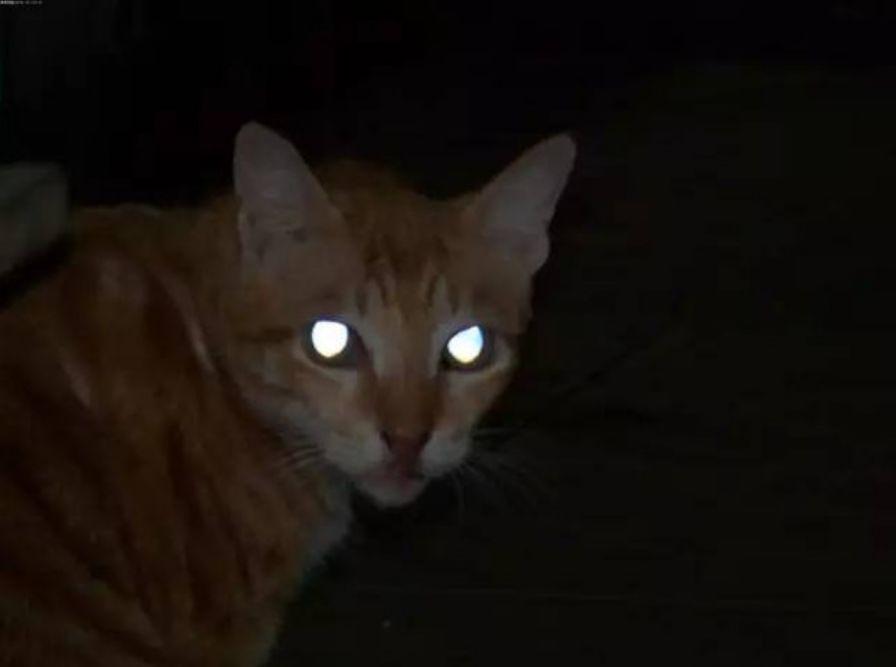 为啥夜间它的眼睛那么邪恶