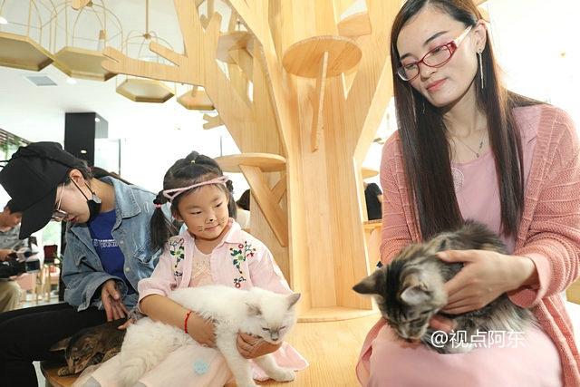 西安有家猫主题音乐生活馆  名猫卖萌尽享人间宠爱 - 视点阿东 - 视点阿东