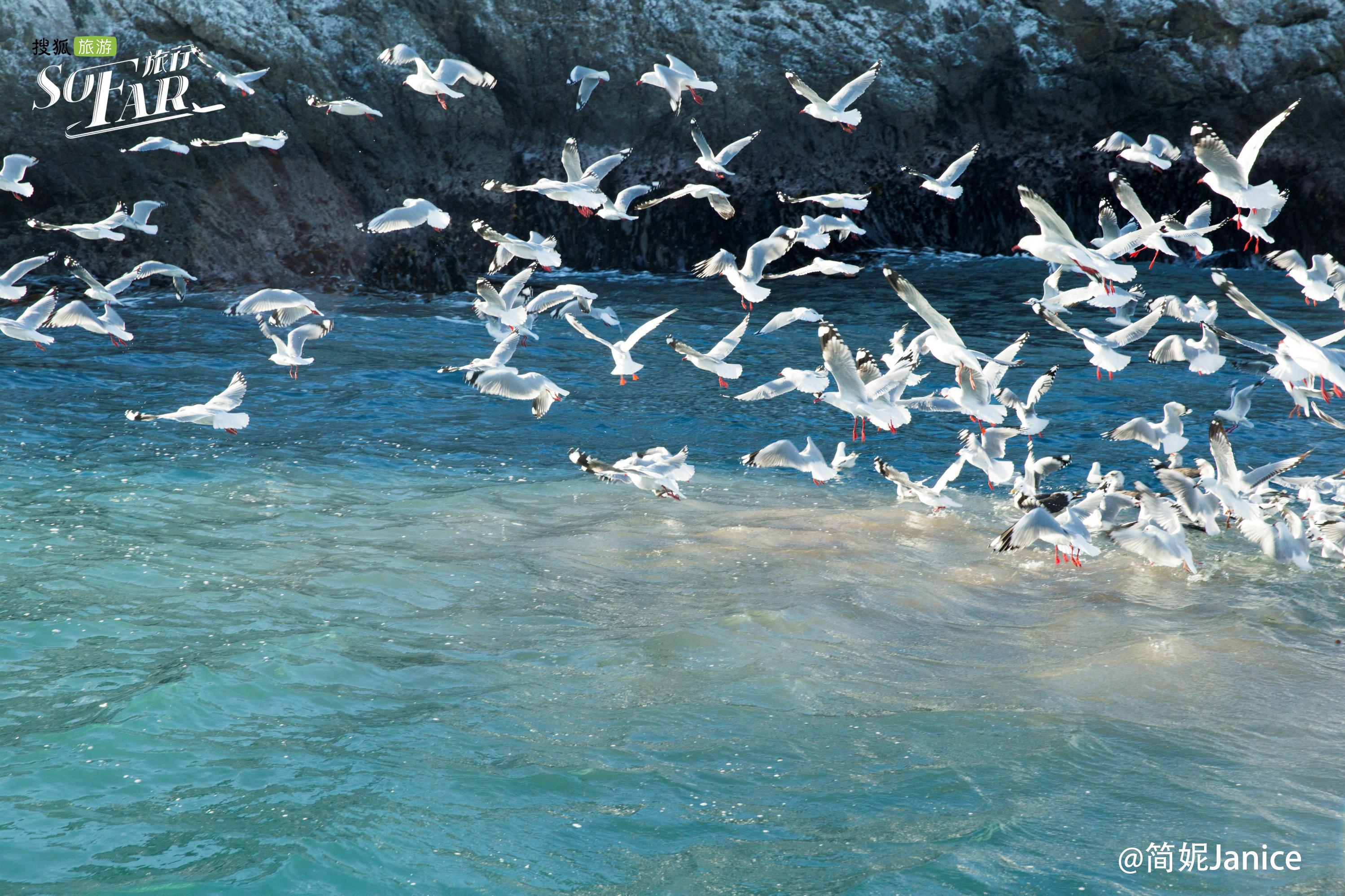 魔幻净土自驾迁移 比影像更美的治愈地——新西兰环岛之旅