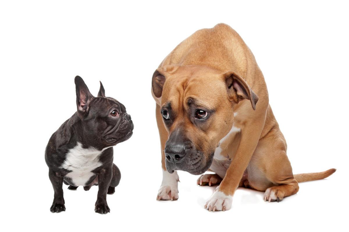 [新手训狗的方法大全]如何建立犬对主人依恋性的方法!