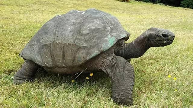 最古老的动物_2015年七大化石发现 最古老的动物精子