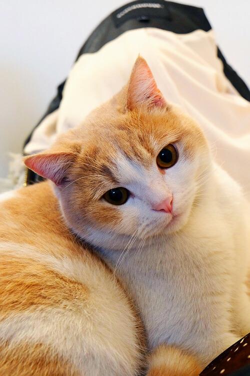 自制 猫 衣服 图纸