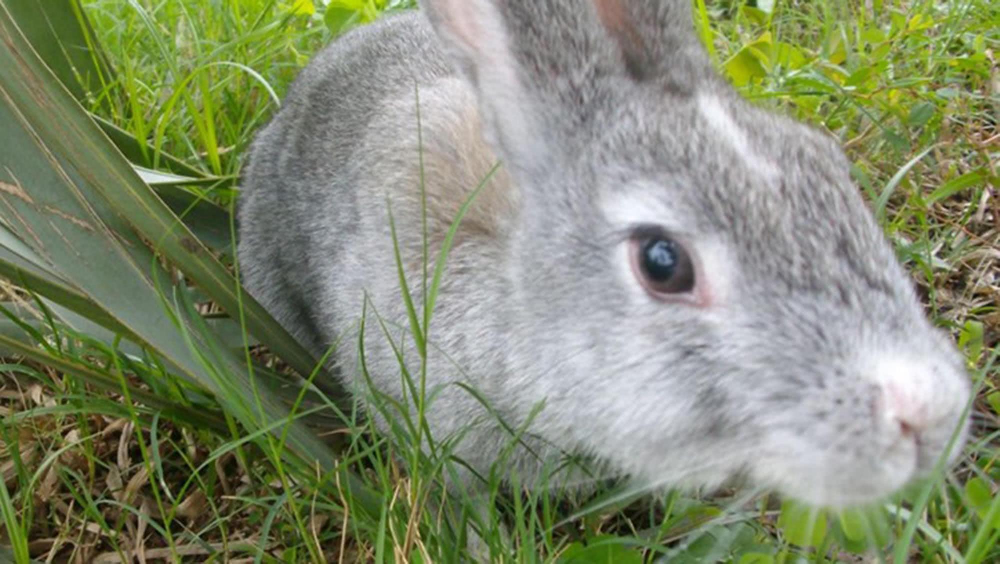 割兔草是总也干不完的活,农村小伙伴有这样觉得吗