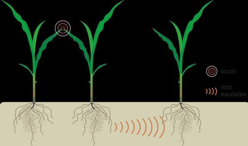 科学家研究植物表明 植物也会说话 不喜欢靠的太近
