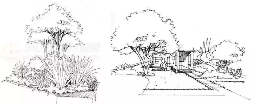 【手绘教程】景观植物线稿表现