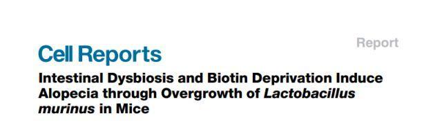 新发现:脱发与肠道菌群不平衡有关!生物素加乳酸杆菌即可治疗