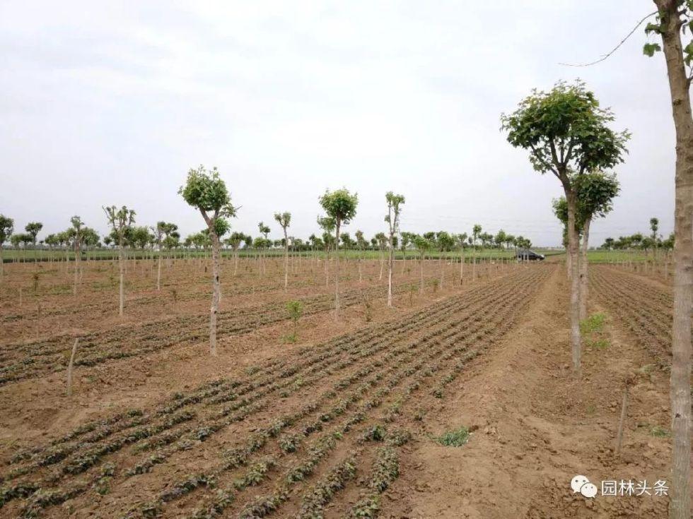 场地种树人口地种庄稼_农民伯伯种庄稼图片
