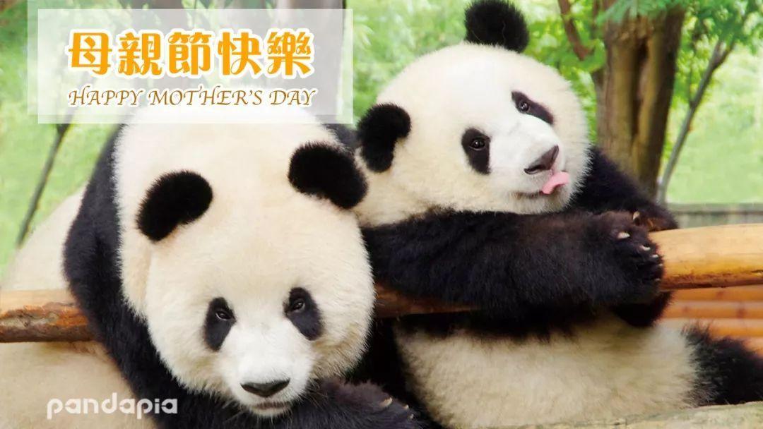 壁纸 大熊猫 动物 1080_608