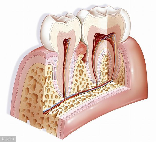 牙癌是什么症状_得了牙龈癌能活多久?医生表示需要依这个来定