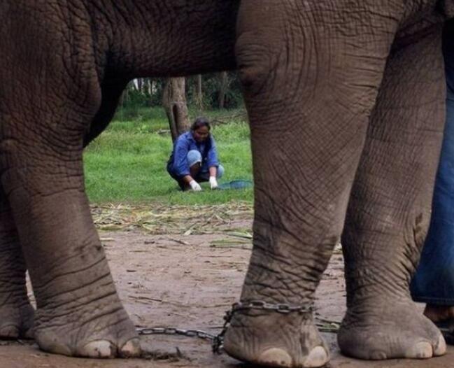 东南亚这种美味从大象粪便中挑出,一公斤近万元,只有富豪吃得起!
