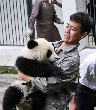 张译被熊猫袭胸 未料被确诊胸部发育本人也吓一跳