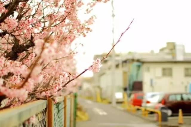 日本的街道,比你想象中的要美100倍!