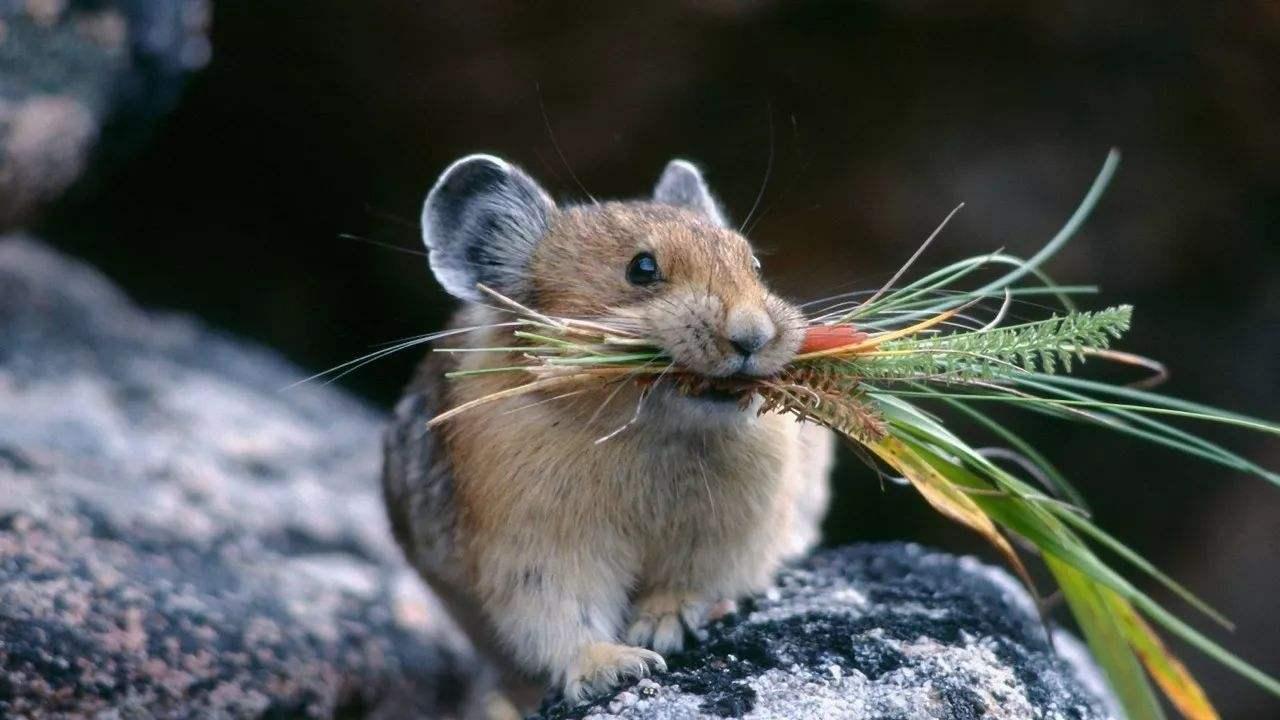 解密西藏千年未解之谜!鸟鼠同穴在无人区真的存在!