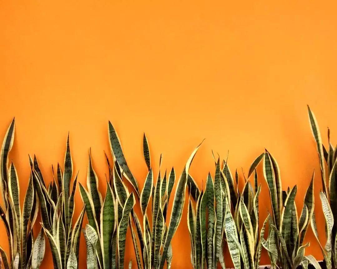 壁纸 草 花 绿色 植物 桌面 1080_862