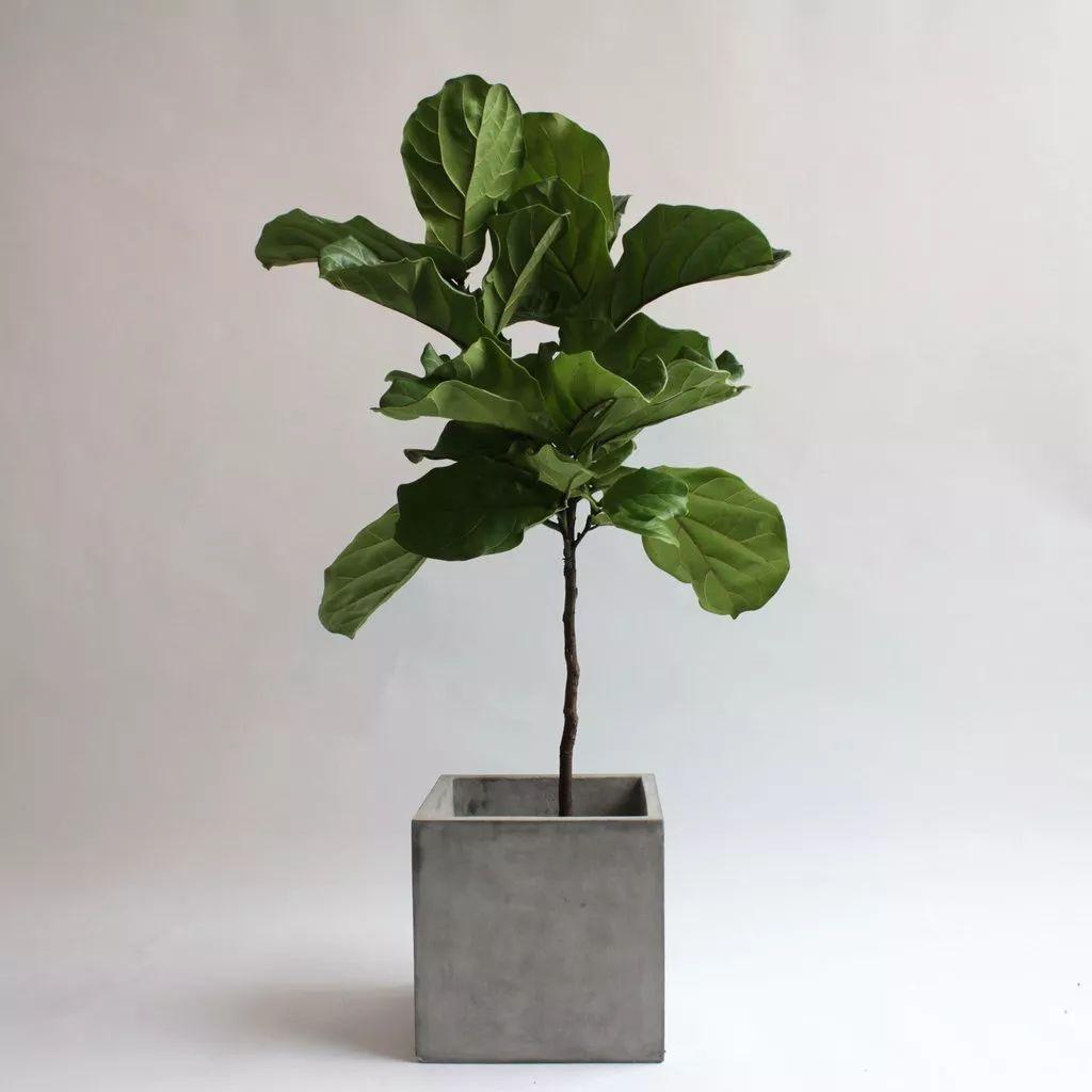 ins风手绘植物素材