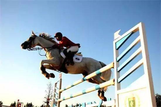 马术教育不等于骑术训练