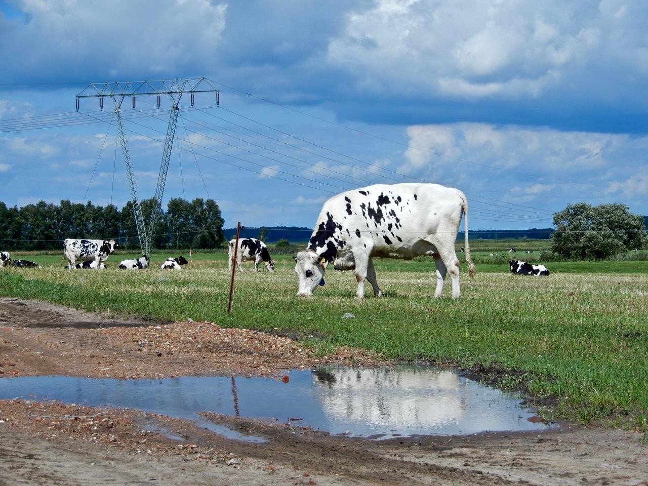 欧游记  夏天到德国乡村去!住古堡看奶牛,逛森林看麦田