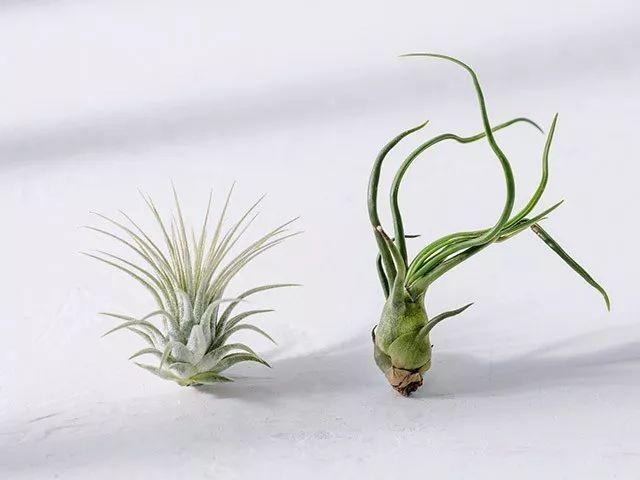 ins植物背景