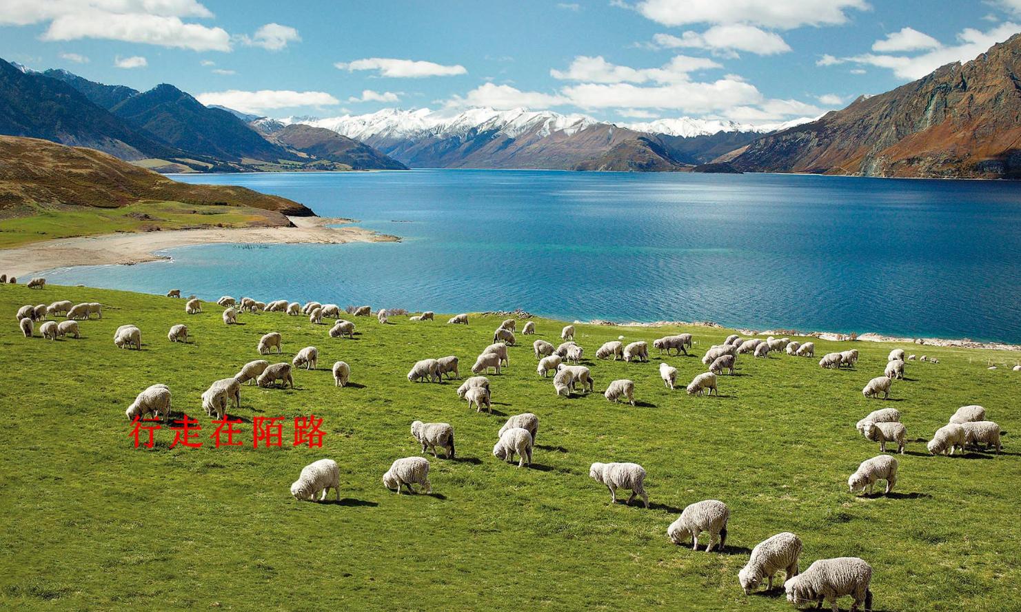新西兰急招:猕猴桃无人采摘白白烂掉,日入千元聘中国游客