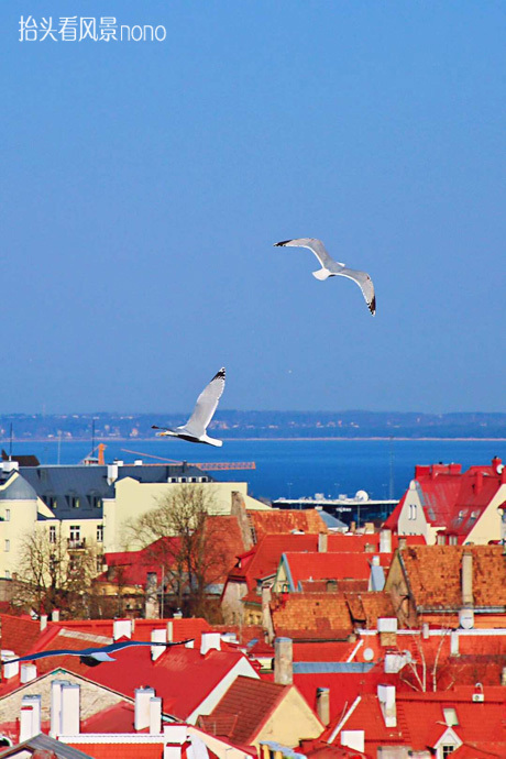 【爱沙尼亚塔林】穿越中世纪的风情之旅
