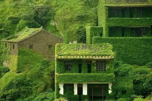 这座海岛被遗弃了20年,却美成绿野仙踪般的童话!