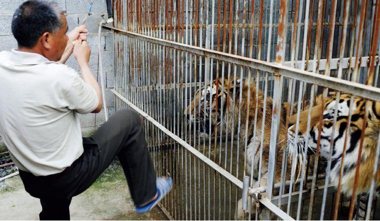 马戏之乡无马戏:拯救动物还是拯救马戏?