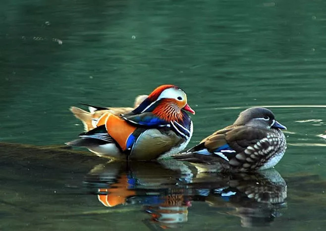 """动物界的爱情观:越是""""禽兽""""越深情"""
