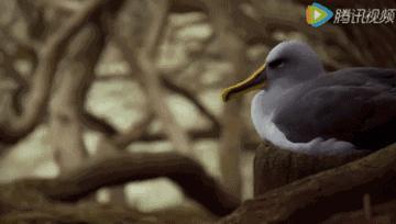 动物界的爱情观,越是禽兽越深情