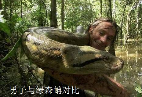 但是无论是网纹蟒还是绿森蚺,与史前巨蛇——泰坦巨蟒比起来都显得