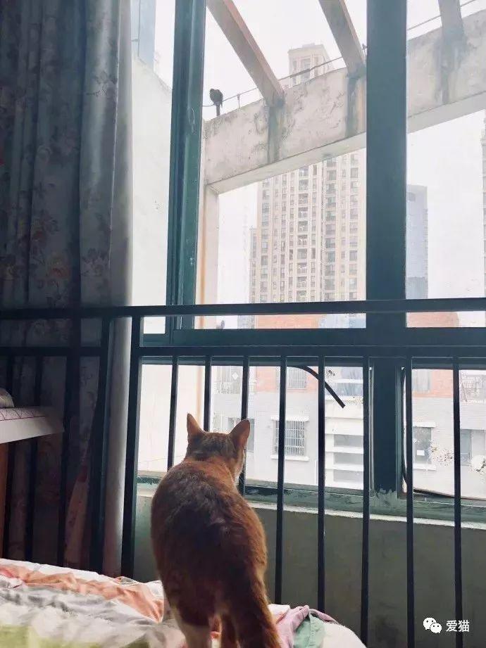 網友的橘貓得罪了小區的鳥,整天遭到鳥拉屎轟炸報復,笑噴~