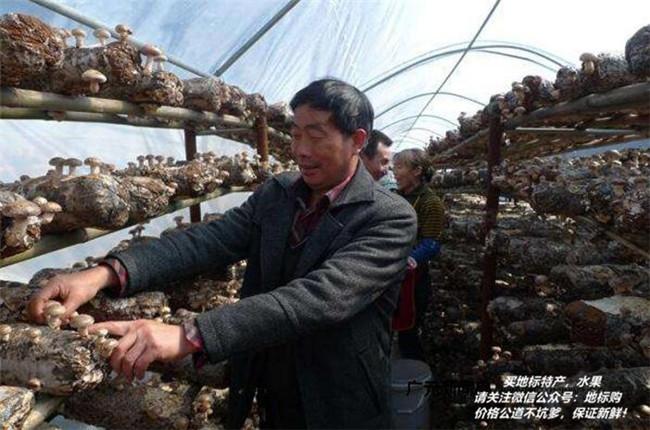 美味菌类:四川地理标志特产