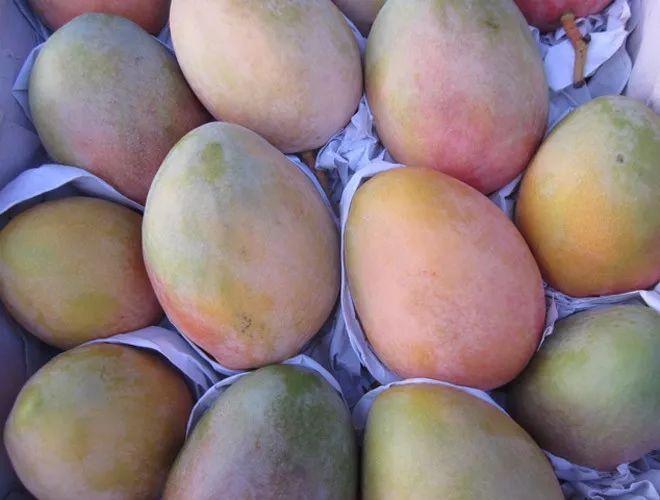 好消息!攀枝花启动芒果深加工项目,以后想吃芒果干、芒果酱再也不用网购了!