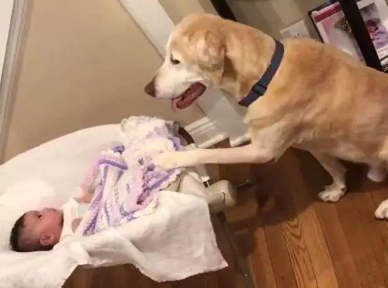 狗狗溜进婴儿房半天没出来,爸爸担心推开门,结果红了眼眶……