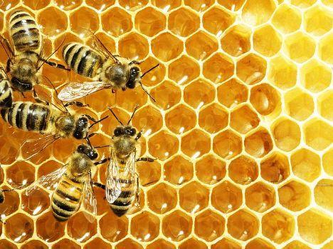 我们在当地跟蜂农出去,1只小蜜蜂一天需要40次采蜜,每次采100朵花夏天养仓鼠聊天木屑吗图片