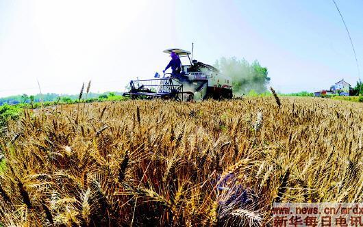 多地小麦开镰收割
