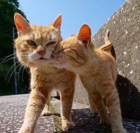 这些猫真是的,就知道蹭蹭蹭!
