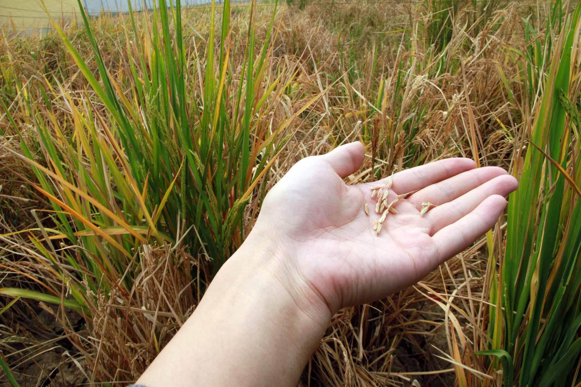 常见转基因农作物有哪些?