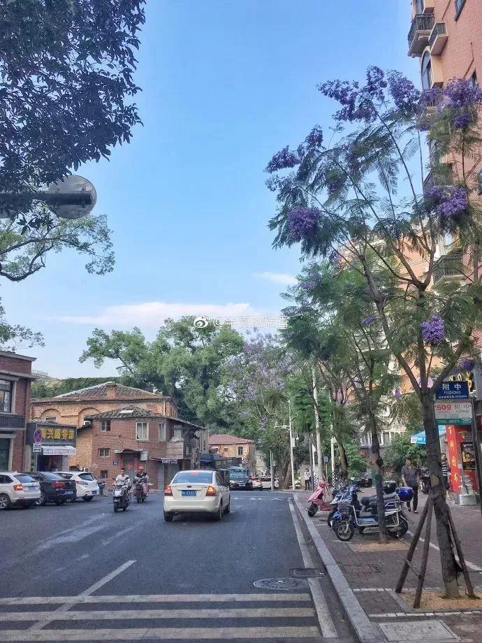 五月性辅_五月的福州是蓝色的!这个地方开了一大片蓝花楹,赶紧