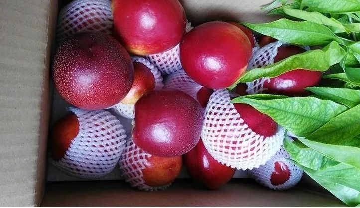 童年味道!来自范爷爷生态园的砀山黄心大油桃,一口蜜甜萦绕舌尖