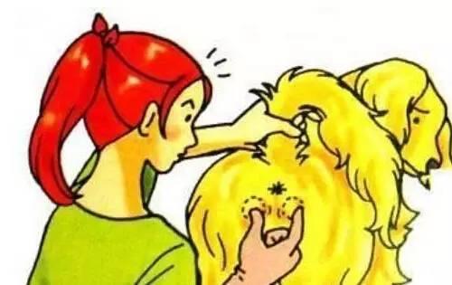 (2)有时会经常舔肛门和尾部.